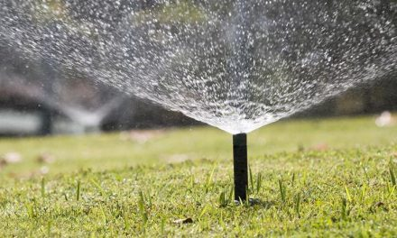 How to Get the Best Sprinkler in the Market